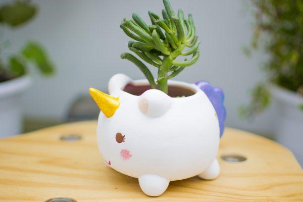 kusi kani estilo de vida feliz - paisajismo y jardineria- maceta unicornio - cactus y suculentas