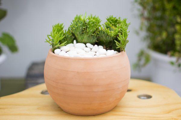 maceta arcilla feliz - cactus y sucuelntas- pasiajismo y jardin