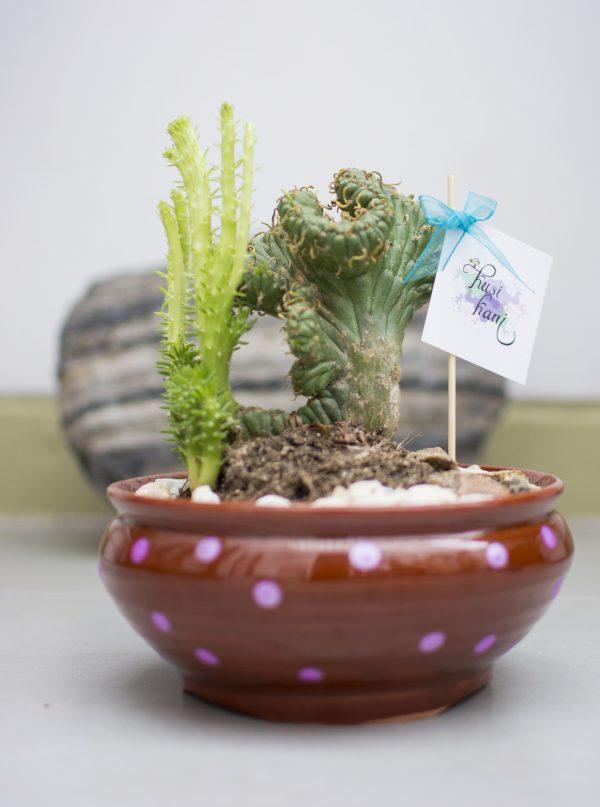 terrario cactus kusi kani - estilo de vida feliz - jardin y paisajismo