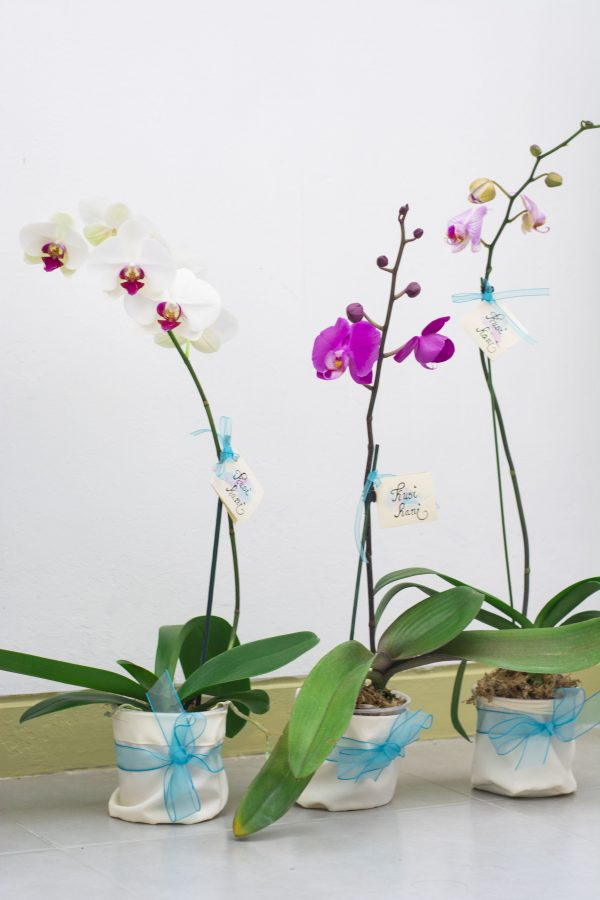 decoracion de jardines - Kusi Kani